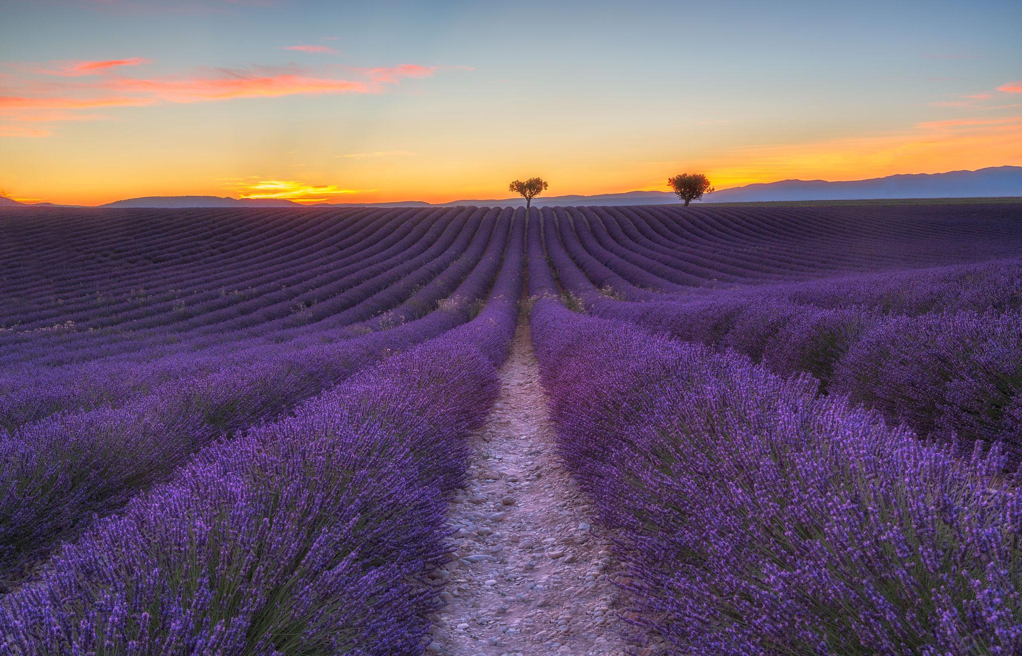 Sonnenuntergang über den Lavendelfelder von Valensole, von Fabio Crudele, ISKS Künstler 2017